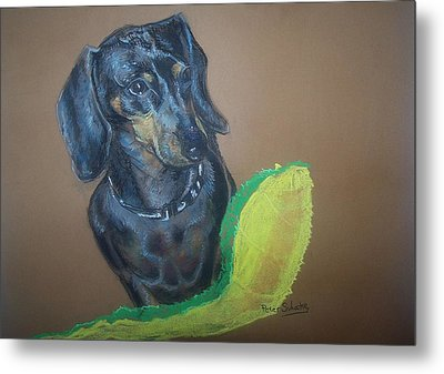 Ozzie Dashound Metal Print