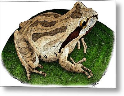 Pacific Chorus Frog Metal Print by Roger Hall
