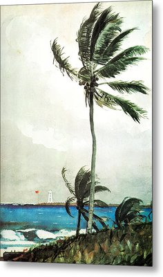 Palm Tree Nassau Metal Print by Celestial Images