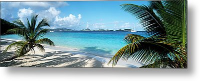 Palm Trees On The Beach, Us Virgin Metal Print by Panoramic Images