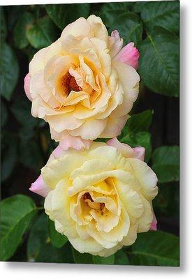 Peace Roses Metal Print