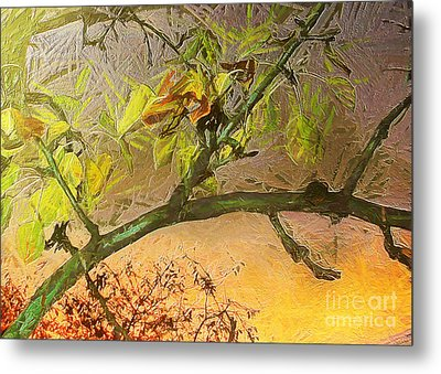 Pear Tree In The Sunset Metal Print by Odon Czintos