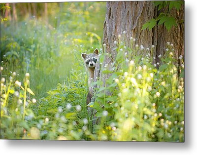 Peek A Boo Metal Print by Carrie Ann Grippo-Pike