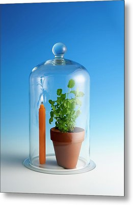 Photosynthesis And Carbon Dioxide Metal Print by Science Photo Library