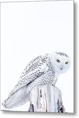 Piercing Eyes Metal Print