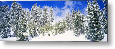 Pine Trees On A Snow Covered Hill Metal Print