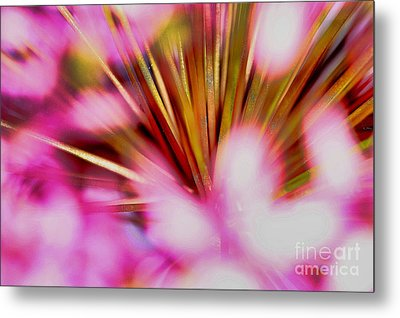 Metal Print featuring the photograph Pink Alium by Rebeka Dove