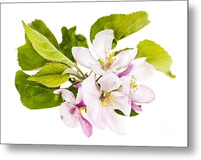 Pink Apple Blossoms Metal Print by Elena Elisseeva