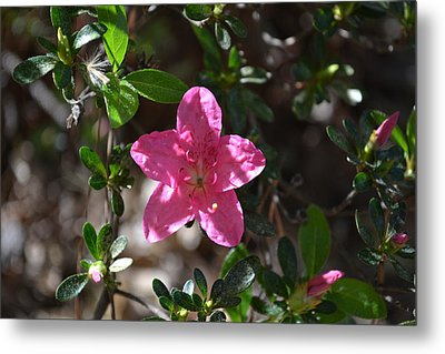 Metal Print featuring the photograph Pink Flower by Tara Potts