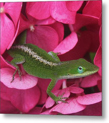 Pink Hydrangea And Lizard 2 Metal Print