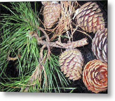 Pitch Pine Cone Metal Print