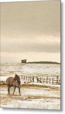 Metal Print featuring the photograph Plaid And Snow by Sandi Mikuse