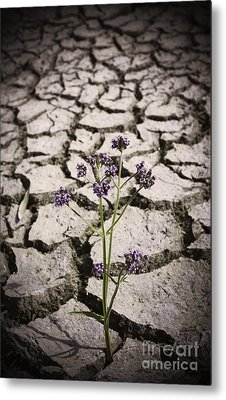 Plant Growing Through Dirt Crack During Drought   Metal Print by Jorgo Photography - Wall Art Gallery
