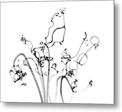 Plant Tendrils Metal Print by Albert Koetsier X-ray