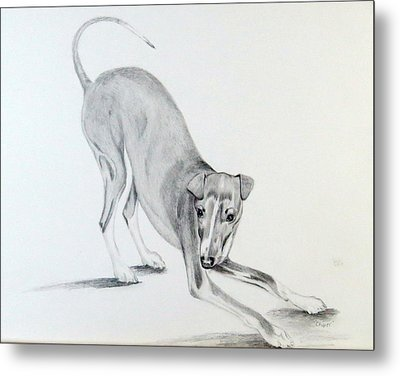 Metal Print featuring the drawing Play Time by Sharon Schultz