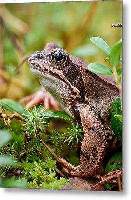 Portrait Of A Frog Metal Print by Jouko Lehto