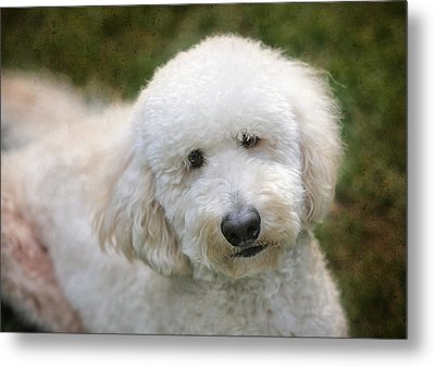 Puppy Portrait Metal Print by Larry Marshall