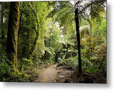 Pureora Forest Metal Print by Les Cunliffe