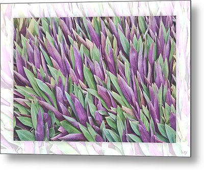 Purple And Green Metal Print by Holly Kempe