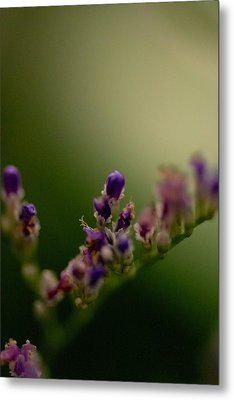 Purple Bud Metal Print