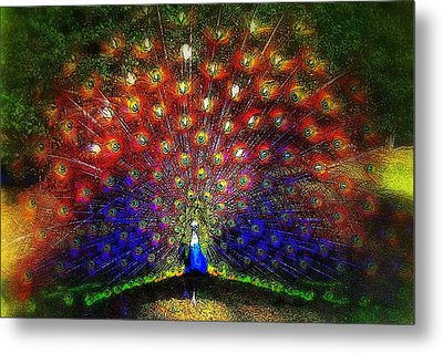 Metal Print featuring the photograph Rainbow Peacock by Jodie Marie Anne Richardson Traugott          aka jm-ART