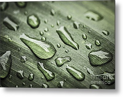 Raindrops On Leaf Metal Print