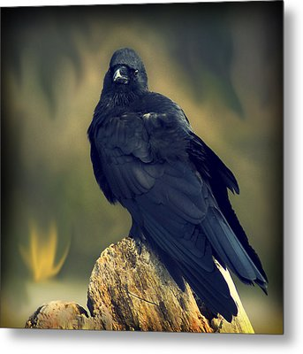 Metal Print featuring the photograph Raven by Yulia Kazansky