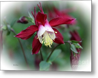 Red Columbine  Metal Print