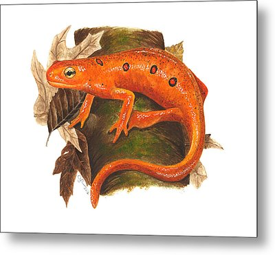Red Eft Metal Print by Cindy Hitchcock