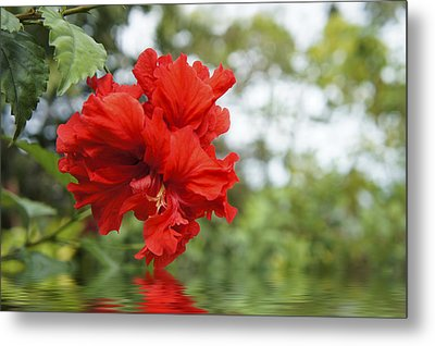 Red Flowers Metal Print by Aged Pixel