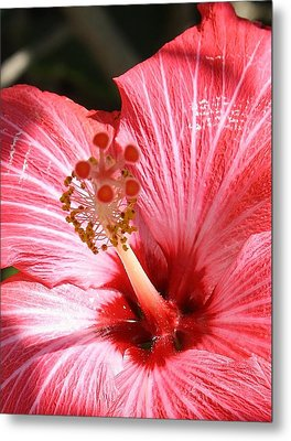 Red Hibiscus Metal Print by Bruce Bley