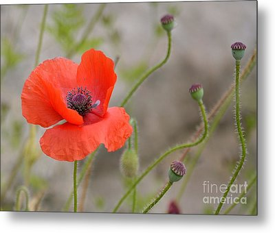 Metal Print featuring the photograph Red by Lisa L Silva