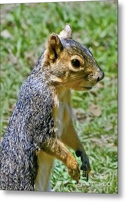 Red Squirrel Metal Print by Bob and Nadine Johnston