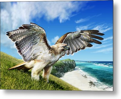 Red-tailed Hawk Metal Print by Owen Bell