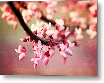 Metal Print featuring the photograph Redbud Blossoms by Trina  Ansel