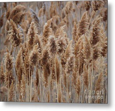 Wind Blown Redish Brown Plants Metal Print