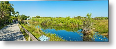 Reflection Of Trees In A Lake, Anhinga Metal Print