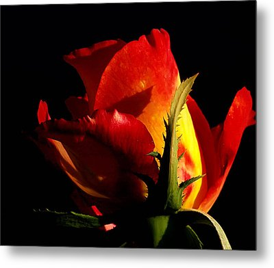 Rising Rose Metal Print by Camille Lopez