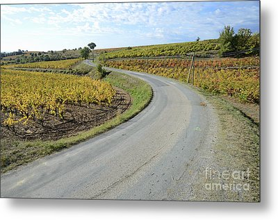 Road By Vineyards With Fall Foliage Metal Print by Sami Sarkis