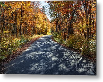 Road In Fall Forest Metal Print