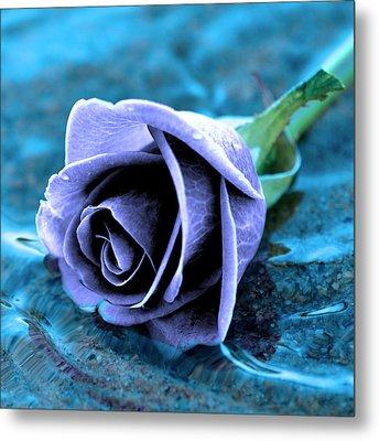 Rose In Water  Metal Print