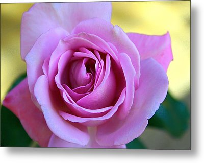 Metal Print featuring the photograph Roses by Denise Moore