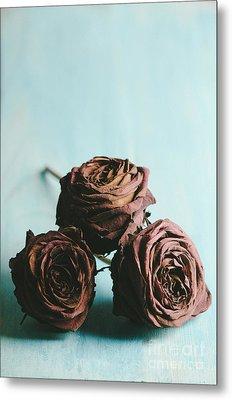 Roses Metal Print by Jelena Jovanovic