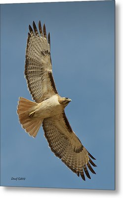 Roxborough Park Road Red Tail Hawk Metal Print
