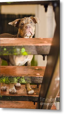 Sad Lost Puppy Dog Looking Up Steps Of A House Metal Print by Jorgo Photography - Wall Art Gallery