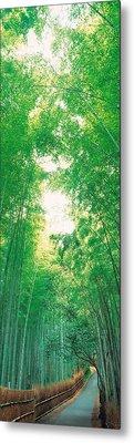 Sagano Kyoto Japan Metal Print by Panoramic Images