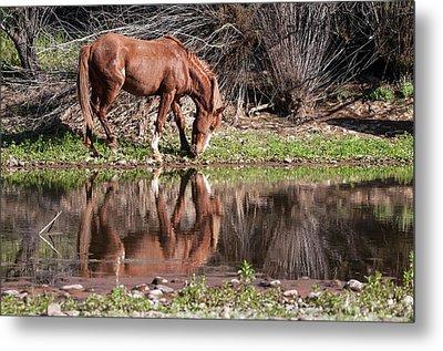 Salt River Wild Horse Metal Print by Tam Ryan