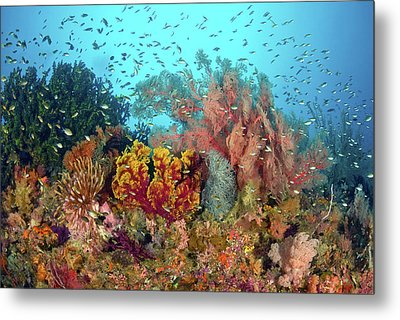 Scenic Of Diverse Reef Life, Misool Metal Print by Jaynes Gallery
