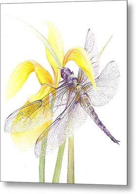 Sheer Wings / Sold Metal Print