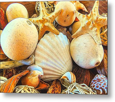 Shells Metal Print by Denise Darby